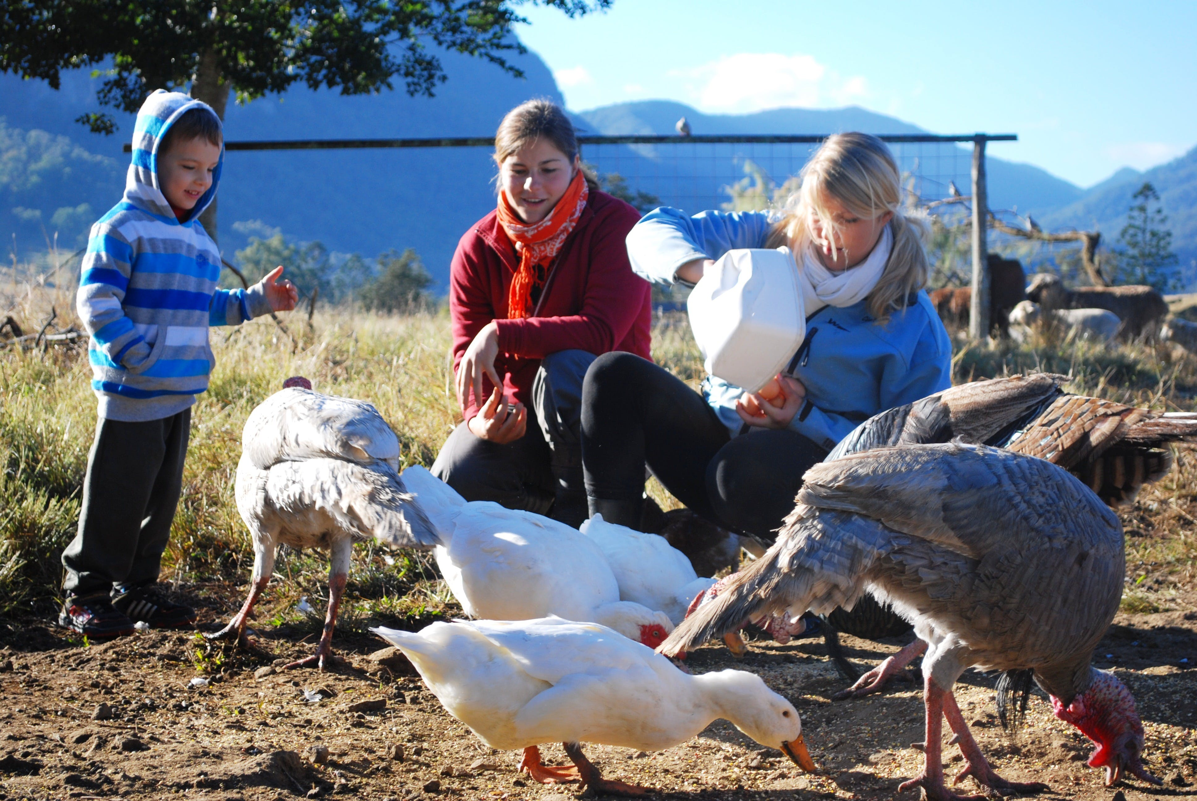 Cedar Glen Farmstay - South Australia Travel