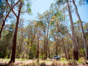 Coolah Tops National Park Camping - South Australia Travel