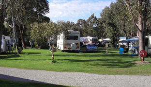Pinjarra Caravan Park - South Australia Travel