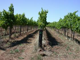 Temple Bruer Winery - South Australia Travel