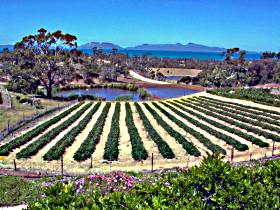 Kate's Berry Farm - South Australia Travel