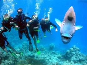 Magic Mountain Dive Site - South Australia Travel