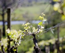 Elan Vineyard and Winery - South Australia Travel