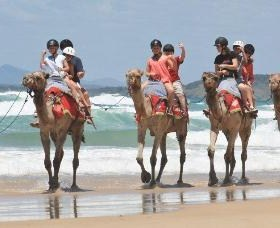 Camel Rides with Coffs Coast Camels - South Australia Travel