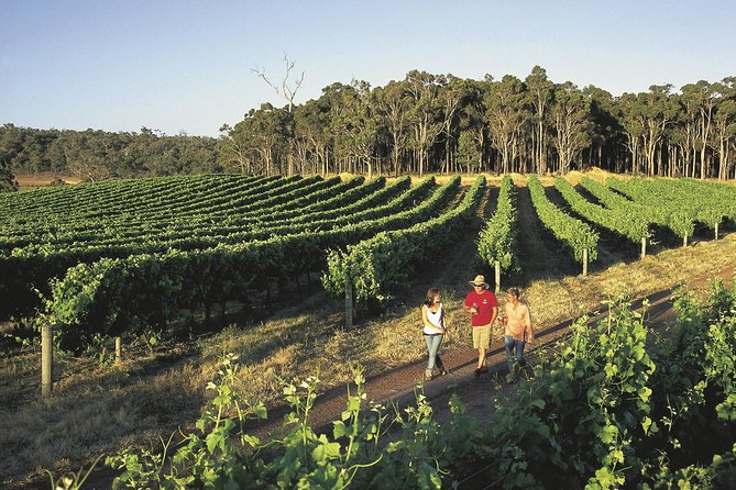 Margaret River Caves Wine and Cape Leeuwin Lighthouse Tour from Perth - South Australia Travel