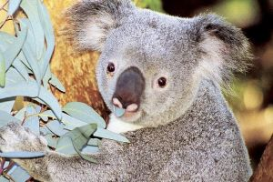 Perth Zoo General Entry Ticket and Sightseeing Cruise - South Australia Travel