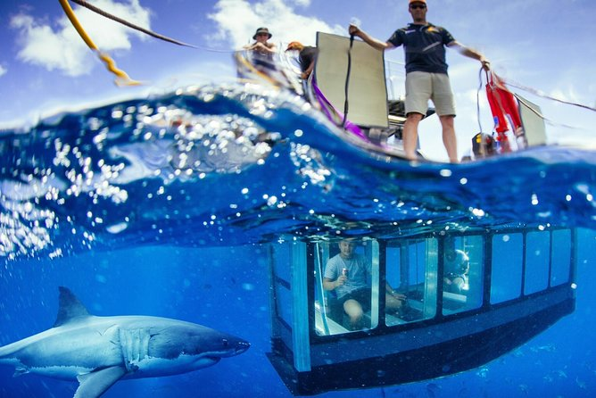 White Shark Tour with Optional Cage Dive from Port Lincoln - South Australia Travel