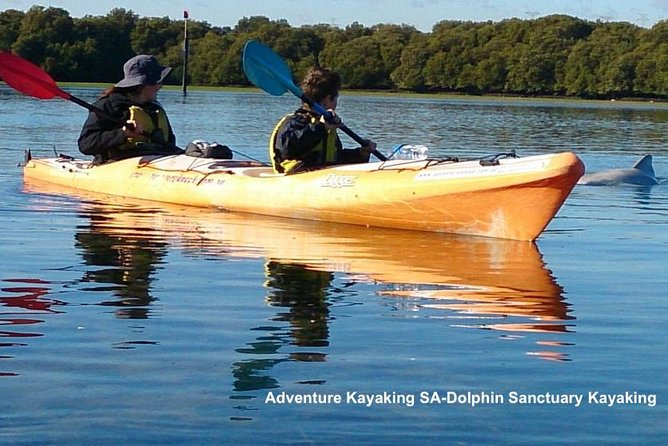 Dolphin Sanctuary and Ships Graveyard Kayak Tour - South Australia Travel