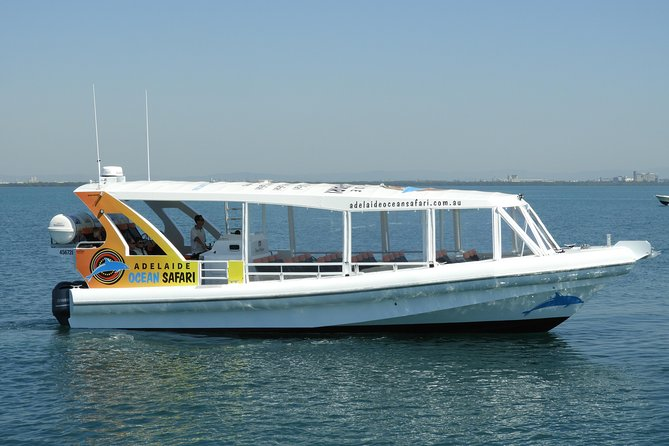 Adelaide Ocean Safari - Wild Dolphin Safari - South Australia Travel