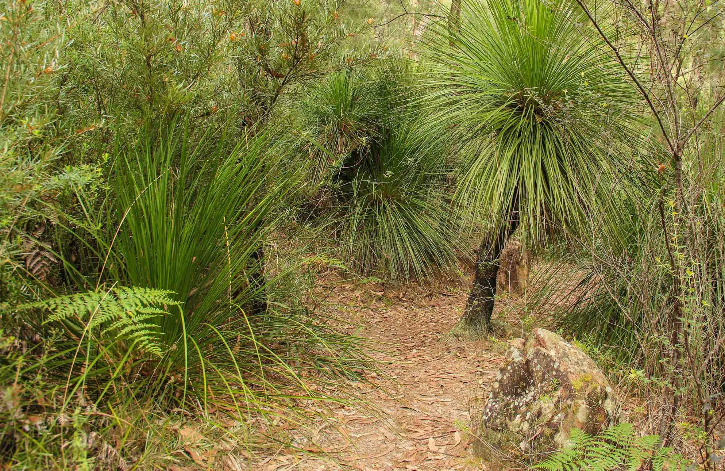 Grass Tree Circuit - South Australia Travel