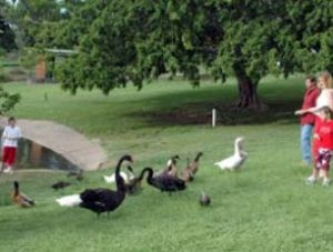 Anzac Park and Ululah Lagoon - South Australia Travel