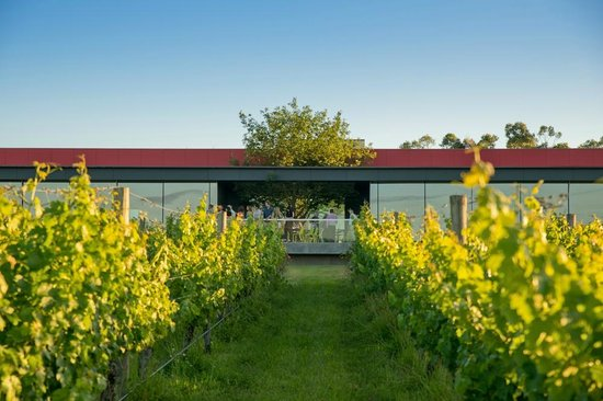 Oakridge Wines - South Australia Travel